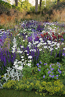 Purple and white color themed perennial garden