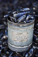 EuEurope/France/Picardie/80/Somme/Baie de Somme/ Le Crotoy: détail étal des marchands de coquilllages- Moules de Bouchot