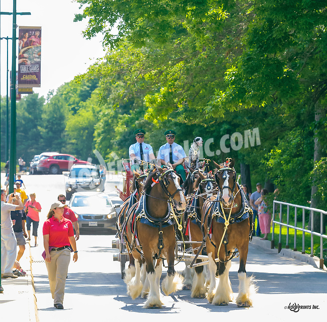 Budweiser Clydesdales at Delaware Park on 6/25/16
