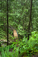 Bridge across the river in Lynn canyon park North Vancouver, British Columbia, Canada.