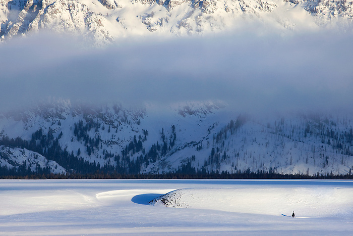 """COLD AND ALONE"" - A lone fir tree stands against the massive backdrop of the Teton Range."