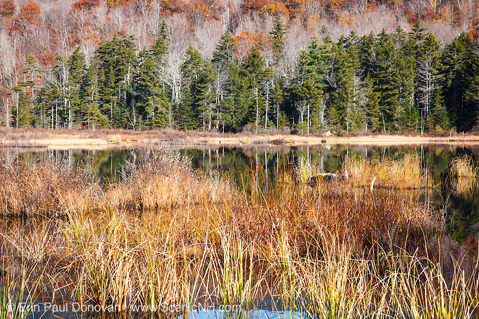 Sandwich Range Wilderness - Guinea Pond during the autumn months in Sandwich, New Hampshire USA. This pond is located along the old Beebe River Railroad which was a logging railroad in operation from 1917 - 1942.
