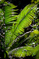 Carajas_PA, Brasil...Floresta Nacional dos Carajas, Para. Na foto detalhe de uma planta...The Carajas National forest , Para. In this photo a plant...Foto: JOAO MARCOS ROSA / NITRO