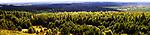 Klucze (woj. małopolskie) 09.09.2017. Zarośnięta południowa część Pustyni Błędowskiej widziana ze wzgórza Czubatka.