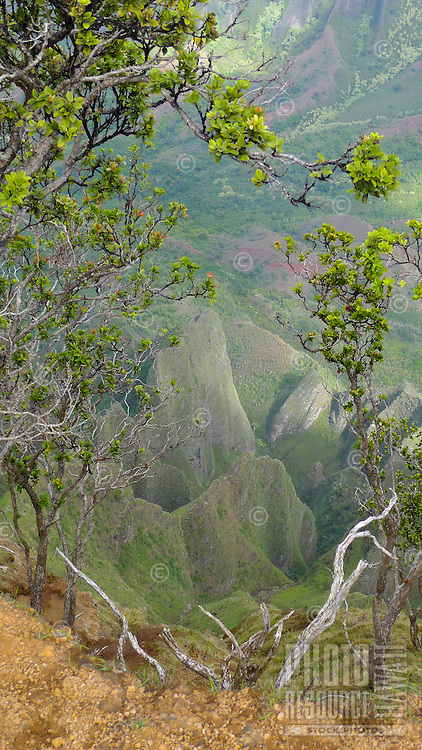 A view of Kalalau Valley from Kalepa Ridge Trail, Koke'e State Park, Kaua'i.