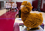 NAUGATUCK,  CT-011820JS13- Larry the good luck llama sits on the scores table as Naugatuck players come out after half-time during their non-league game against Shepaug Saturday at Naugatuck High School. <br /> Jim Shannon Republican-American
