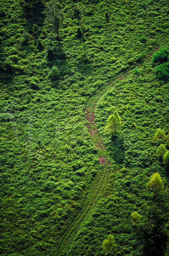 aerial view of path in forest