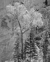 &quot;Sheep Rock Canyon&quot; Flaming Gorge National Recreation area; Utah<br />