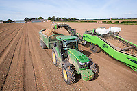 Harvesting onions with a AVR Apache harvester - Lincolnshire, August