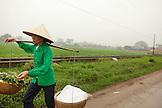VIETNAM, Hanoi, a farmer transports produce along a countryside road in rural Hanoi