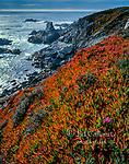 Ice Plant, Garrapata State Park, Big Sur, Monterey County, California