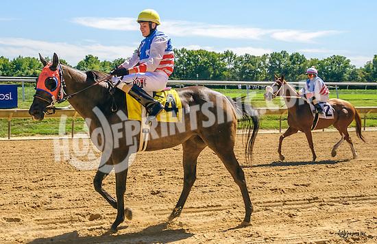Luigi P with Jose Bracho aboard winning The Longines International Gentlemen Fegentri race at Delaware Park on 9/12/16