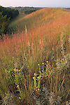 native ridge prairie, Mount Talbot State Preserve, Loess Hills, Iowa