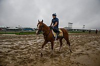 BALTIMORE , MD - MAY 16:  Good Magic jogs over a sloppy track in preparation for the Preakness Stakes at Pimlico Racecourse on May 16, 2018 in Baltimore, Maryland. (Photo by Alex Evers/Eclipse Sportswire/Getty Images)