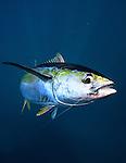 Fishtrack - Panama