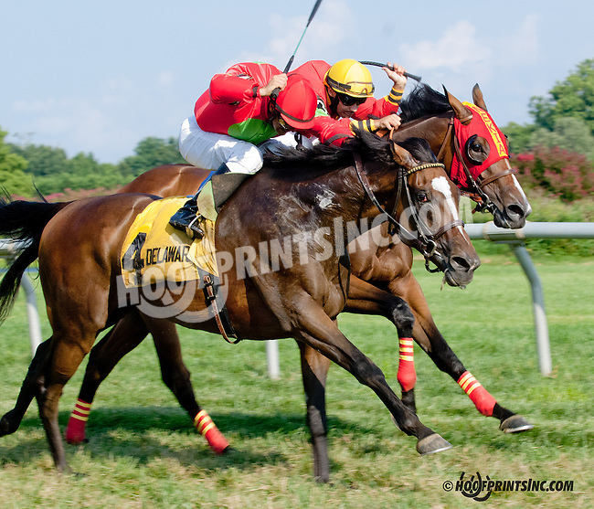 Royal Bench winning The Cape Henlopen Stakes at Delaware Park on 8/21/13