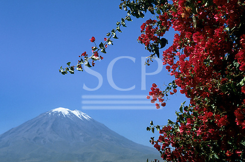 Arequipa, Peru. View of 'El Misti' volcano with flowering plant.