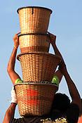 O pequeno fruto de a&ccedil;a&Igrave; (Euterpe oleracea) movimenta a economia das popula&ccedil;&otilde;es ribeirinhas no estado.  Diariamente  dezenas de barcos chegam trazendo os frutos colhidos por moradores na regi&atilde;o das ilhas e comercializado no porto. <br /> Carregadores embarcam o fruto.<br /> Abaetetuba, Par&aacute;, Brasil<br /> Foto Paulo Santos/Interfoto<br /> 26/09/2008