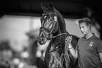 GBR-Carl Hester presents Hawtins Delicato during the Horse Inspection for Dressage. 2018 FEI World Equestrian Games Tryon. Tuesday 11 September. Copyright Photo: Libby Law Photography