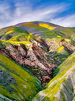 Wildflowers covering hills. Carrizo Plain National Monument, California