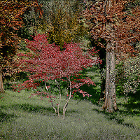 Trees in wildelife reserve