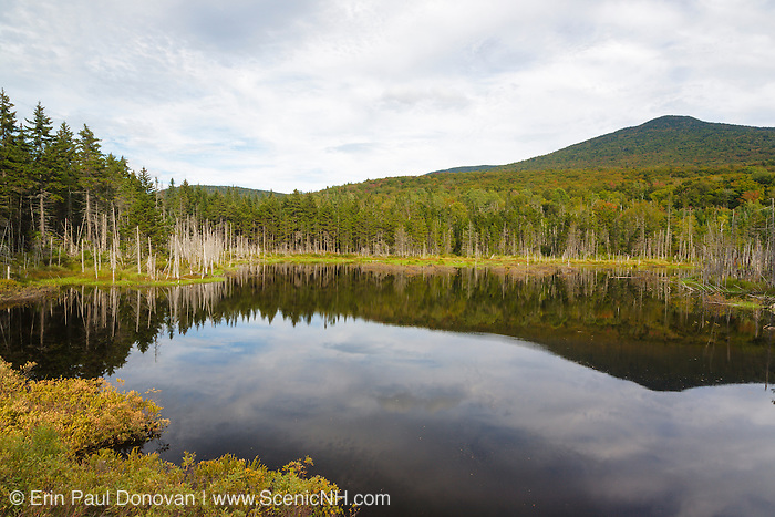 Reflection of Mount Deception in a small pond along Old Cherry Mountain Road in Carroll, New Hampshire USA during the summer months.
