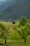 Orchard and cow sheds,Imst district, Tyrol/Tirol, Austria, Alps.