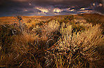 Threatening skies provide a dramatic backdrop to beautifully lit sagebrush