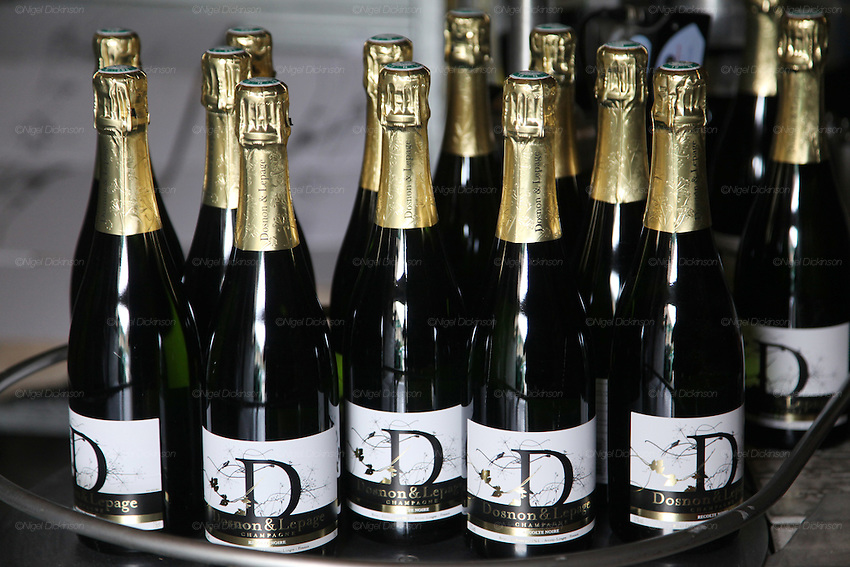 Champagne brand: Dosnon & Lepage. Labelled bottles ready for export. Avirey-Lingey, Champagne Ardennes, France..A new generation of vignerons around Troyes, city of the Aube, the forgotten region of Champagne, France. These new, but not necessarily young, producers, make Champagnes that are in many ways anti-Champagnes. Where Champagne for a century has made a myth of the art of blending, in which the usual distinctions of terroir, grape and vintage disappear into the house blend, these producers take a Burgundian approach to making Champagne, emphasizing all these qualities that are taken for granted as important in other regions but are largely ignored in Champagne. In a sense they each are a microcosm for larger changes taking place throughout the Champagne region, not just in the Cote des Bars, and for changing perceptions of Champagne on the part of American consumers