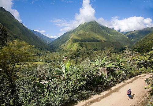 TROPICAL VALLEY NEAR SANTA TERESA, PERU