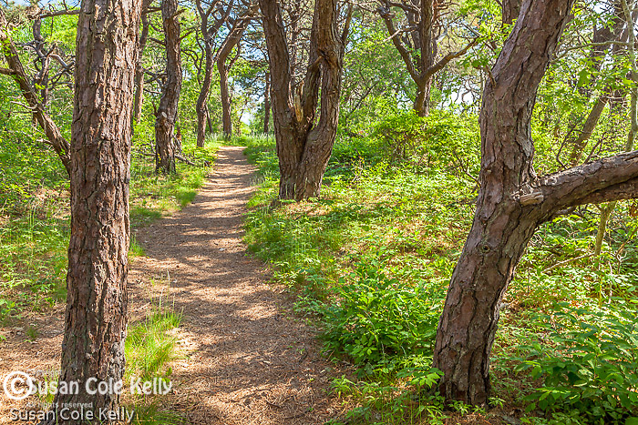 The Pilgrim Spring Trail in Cape Cod National Seashore, Truro, MA, USA