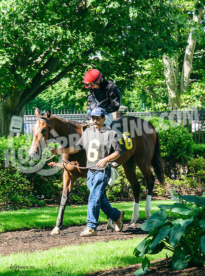 Browse before The Our Mims Stakes at Delaware Park on 6/8/16