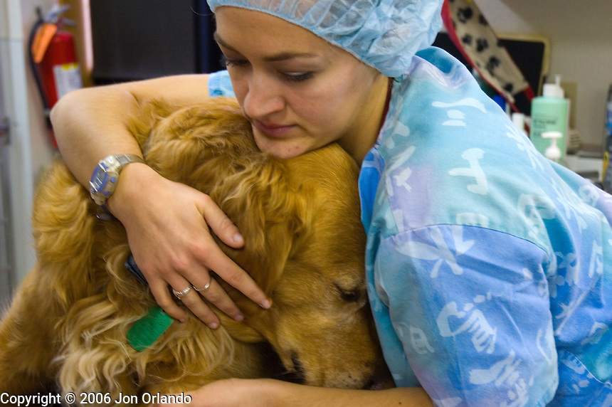 A morning at the Flatiron Veterinary Specialists in Longmont, Colorado.<br />