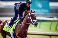 May 01, 2014: Danza prepares for the Kentucky Derby at Churchill Downs in Louisville Ky. Alex Evers/ESW/CSM