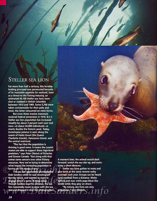 "BRITISH COLUMBIA Magazine ""Stellers Sea Lion"" Page."