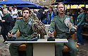"""Edinburgh, UK. 09.08.2016. Cast members, Lewis Howard (as Callum) and  Ben Dyson (as Paddy) from """"Swivelhead"""", Pipeline Theatre's new play, meet a barn owl and an eagle owl in the courtyard at the Pleasance. """"Swivelhead"""" runs from 3rd - 29th August in Peasance 2. Photograph © Jane Hobson."""