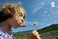 Girl (9) blowing seeds off dandelion, side view (Licence this image exclusively with Getty: http://www.gettyimages.com/detail/92866131 )