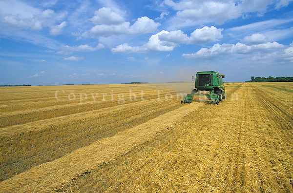 Combine harvesting rows of swathed wheat on Nelson Farm near Casselton, North Dakota, AGPix_0701.