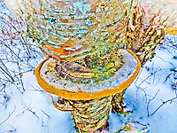 """COLORFUL CONK""<br />