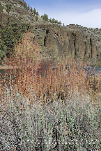 Willow and sage along the Crooked River, Oregon.