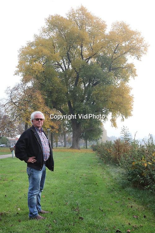 Foto: VidiPhoto<br /> <br /> DORDRECHT - Medewerker stadsbeheer van de gemeente Dordrecht, Rob Vroon, bij een populier aan de Maasstraat die geplant is rond het jaar 1920.