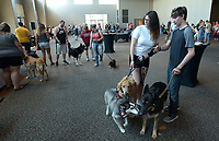 NWA Democrat-Gazette/ANDY SHUPE<br /> Molly Lonon and Christian Goodman, both of Fayetteville, guide their dogs, Nika (from left), Gus and Elsie, Saturday, July 7, 2018, while watching other dogs during the first Bark Bash sponsored by Leisurlist and Fayetteville Town Center at the Town Center in Fayetteville. The event featured vendors and a play area.