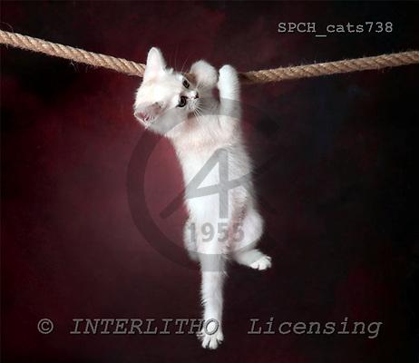 Xavier, ANIMALS, cats, photos+++++,SPCHCATS738,#a# Katzen, gatos