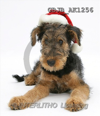 Kim, CHRISTMAS ANIMALS, photos(GBJBAK1256,#XA#) stickers