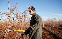 1/2/2011-  Kent Callaghan  prunes his winter grape vines at Callaghan Vineyards in Sonoita, Arizona. (Photo by Pat Shannahan)