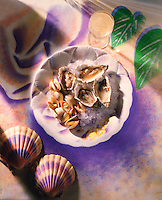 Top shot of Oysters on ice against an illustrated background