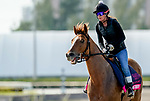 January 24, 2020: War Story jogs as horses prepare for the Pegasus World Cup Invitational at Gulfstream Park Race Track in Hallandale Beach, Florida. Scott Serio/Eclipse Sportswire/CSM