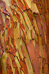 Madrona bark, San Juan Island, Washington
