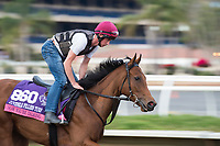 DEL MAR, CA - NOVEMBER 02: Now You're Talking, owned by Keir MacLennan, Mikael Jooste & Ed Tynan and trained by Joseph O'Brien, exercises in preparation for Breeders' Cup Juvenile Fillies Turf at Del Mar Thoroughbred Club on November 2, 2017 in Del Mar, California. (Photo by Jamey Price/Eclipse Sportswire/Breeders Cup)