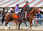 Moonshine Memories in the post parade Dream Tree (no. 8) wins the Prioress Stakes (Grade 2), Sep. 2, 2018 at the Saratoga Race Course, Saratoga Springs, NY.  Ridden by Mike Smith, and trained by Bob Baffert, Dream Tree finished 4 1/4 lengths in front of Mia Mischief (No. 4).  (Bruce Dudek/Eclipse Sportswire)